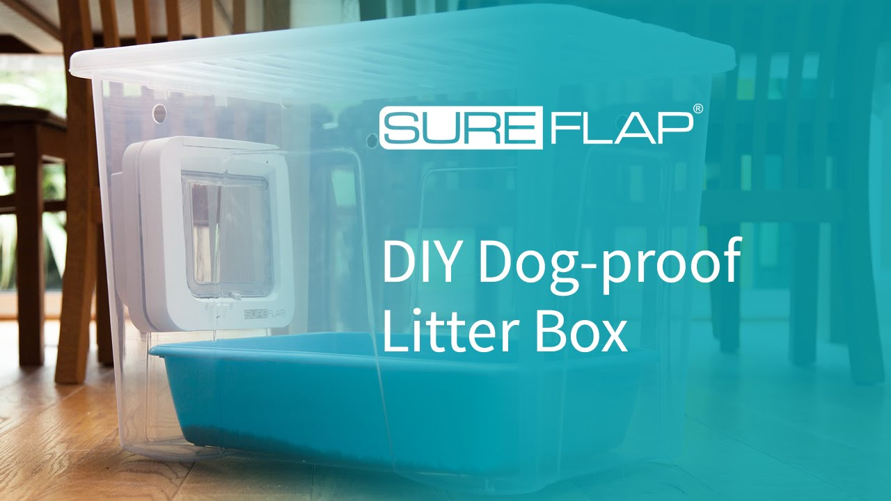 Best cat litterbox to keep dogs out
