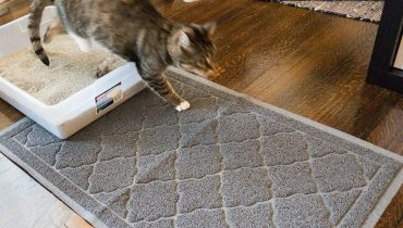 Best Cat Litter Trapper Mat