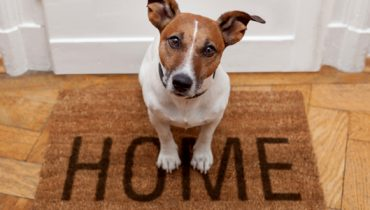 TIPS TO KEEP YOUR HOME PET ODOR FREE